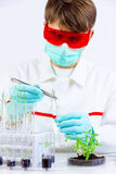Testing gmo products. Environmental sciences. Scientist planting gmo plant with tongs in laboratory royalty free stock image
