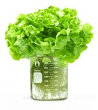 Pesticides Hydroponic Lettuce Beaker Food Stock Images