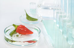 Testing peppers for contamination with pesticides i Royalty Free Stock Images