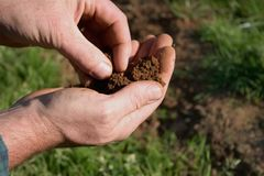 Testing the Soil royalty free stock photos