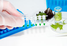 Testing of vedetable samples Stock Photos