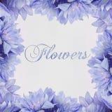 Testo dei fiori su fondo bianco Fotografia Stock