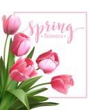 Testo della primavera con il fiore del tulipano Vettore Fotografie Stock