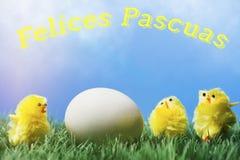 Testo di saluto di pasqua dello Spagnolo; Gruppo di pulcini che circondano uovo Immagine Stock Libera da Diritti