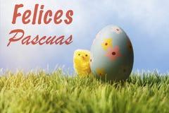Testo di saluto di pasqua dello Spagnolo; Uovo di Pasqua e pollo blu Immagine Stock