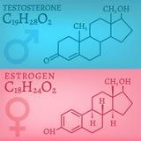 Testosteron en Oestrogeen Royalty-vrije Stock Afbeelding