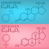 Testosterone and Estrogen Royalty Free Stock Image