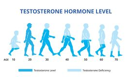 Testosterone hormone levels chart, vector. File for use, chart level vector illustration