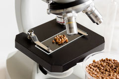 Tests for pesticides in cereal in at laboratory Stock Images