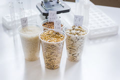 Tests for pesticides in cereal in at laboratory. No one Stock Photography