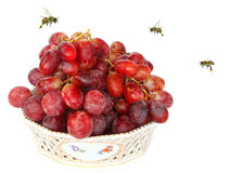 Testy atraction. Red grapes and honey bees isolated on a white background Stock Images