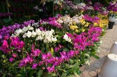 Tet on Ho Chi Minh city, flower market Stock Images