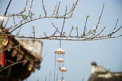 Tet in Vietnam 2019 -bonsai royalty free stock photo