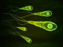 Tetanus bacteria Stock Photo