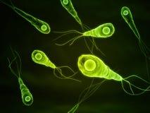 Tetanus bacteria Stock Images