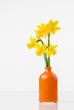 Tete a Tete daffodils in vase Stock Photos