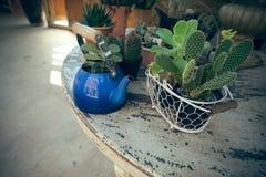 Tetera azul con el cactus y las plantas suculentas encima del grunge TA Fotos de archivo