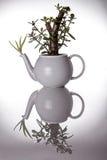 Tetera usada como pote inusual de la planta ornamental fotografía de archivo