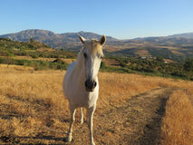 Tethered Horse Stock Photos