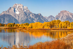 Teton在Oxbow弯的秋天反射 免版税库存图片