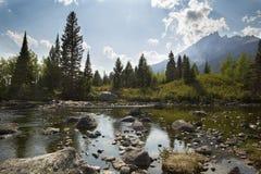 Teton山和杉树,三角叶杨小河,杰克逊Hole, 免版税图库摄影