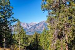 Teton范围和树 免版税库存照片