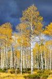 teton национального парка осени грандиозное Стоковые Фото