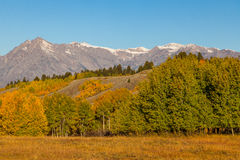 Teton Autumn Royalty Free Stock Photo