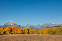 Teton Autumn Splendor Photographie stock