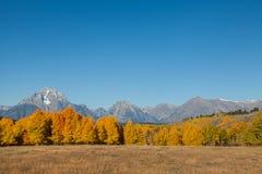 Teton Autumn Splendor Stock Photography