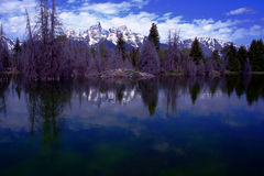 Teton Beaver Ponds Stock Images