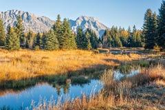 Teton Fall  Reflection Royalty Free Stock Photography