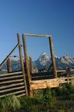 Teton grand renfermé dans un corral image libre de droits
