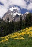 Teton grande NP Immagini Stock Libere da Diritti