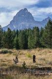 Teton grande que aumenta acima das árvores, de um campo, e da madeira inoperante fotografia de stock royalty free