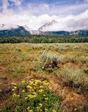 Teton grande, Wyoming Imagens de Stock