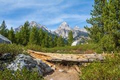 Teton krajobraz z sosnami i spadać drzewem zdjęcie royalty free