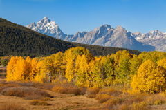 Teton Landscape in Fall Stock Photography