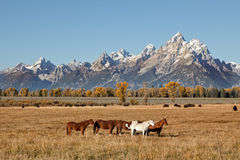Teton Landscape in Fall Royalty Free Stock Images