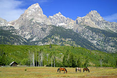 Teton Meadow Royalty Free Stock Image