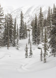 Teton Mountain Firtrees and Snow Drifts Royalty Free Stock Photography