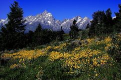 Teton Mountains. At Yellowstone National Park Royalty Free Stock Photography