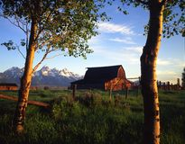Teton Ranch. A barn and aspen trees with the Grand Teton Mountain Range in the background Royalty Free Stock Photography