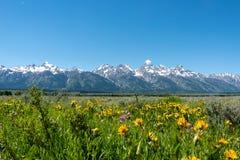 Teton Wildflowers στοκ εικόνα