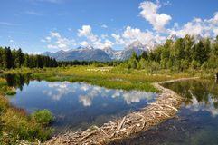 Tetons Beaver Dam. Beaver Dam in Grand Teton National Park Stock Image