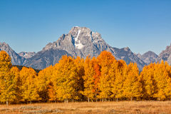 Tetons in Fall Splendor. A scenic teton fall landscape with colorful aspens