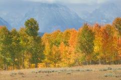Tetons Fall Stock Photography