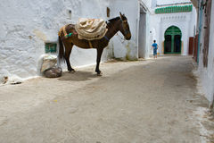 Tetouan,摩洛哥骡子  免版税库存照片