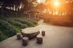 Teträdgård i Kina på solnedgången Royaltyfri Fotografi