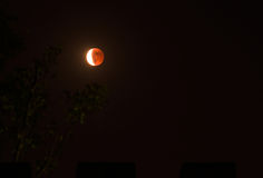 Tetrad Passover of Blood Moon Royalty Free Stock Image